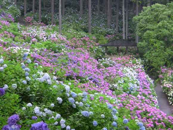 出典:http://homepage3.nifty.com/ajisaiyashiki/index.html