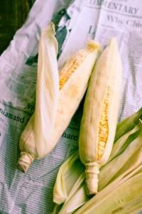 corn03