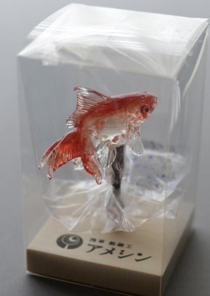 アメシン 金魚