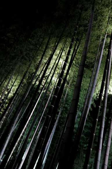 高台寺 竹林