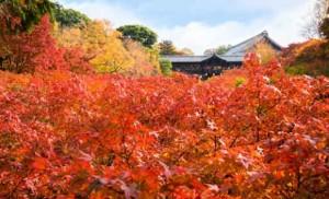 臥雲橋からの紅葉