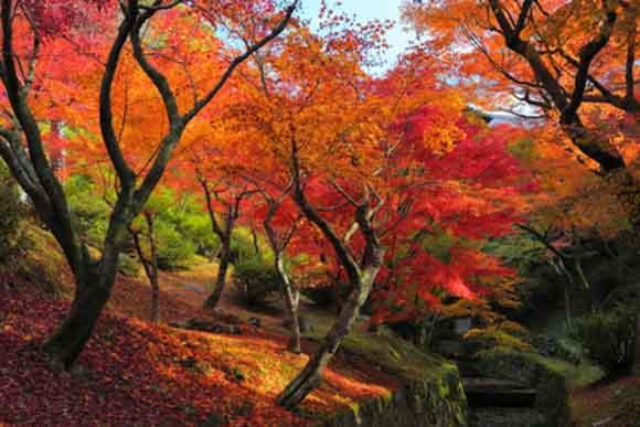 kyoto-kouyo-4