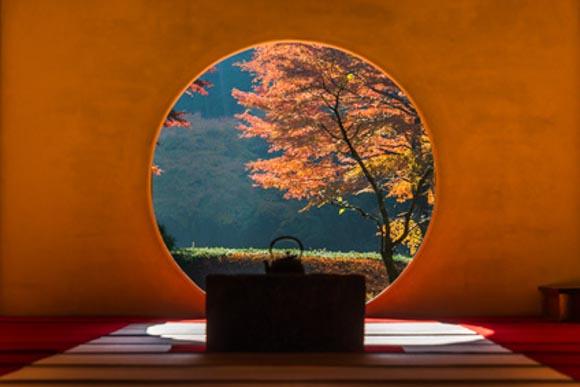 北鎌倉の明月院で五郎丸リス発見!見どころはあじさいと紅葉以外にもあった!