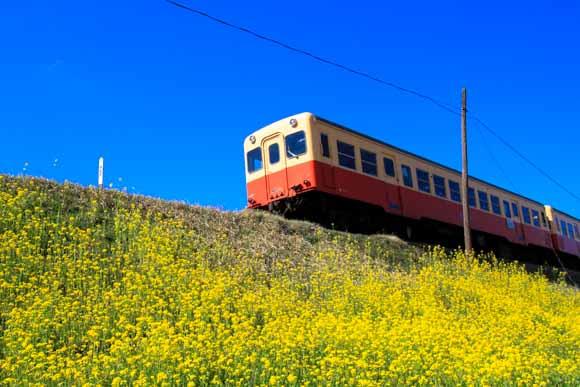 千葉で菜の花と列車が撮影できるスポット!小湊鉄道と夷隅鉄道