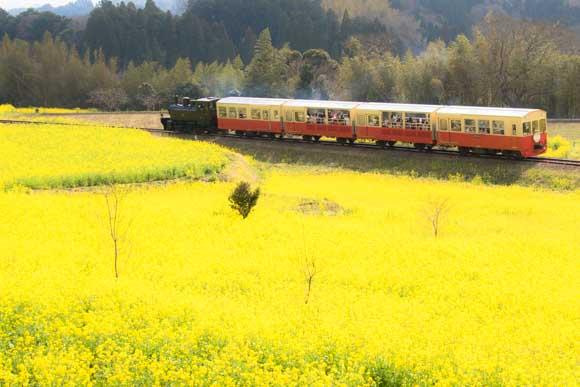 小湊鉄道の菜の花2016撮影地は養老渓谷駅で決まり!【見頃は今】