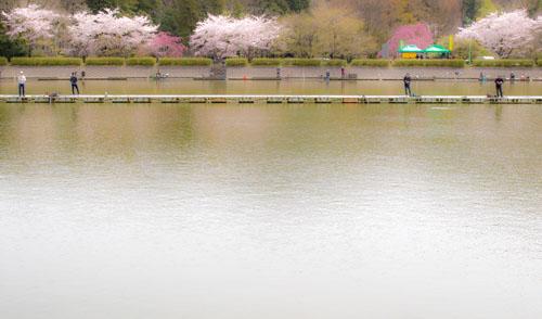 higasiyamako-13