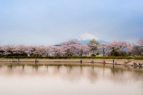 御殿場アウトレット周辺なら東山湖と桜と富士山の景色を見逃すな!