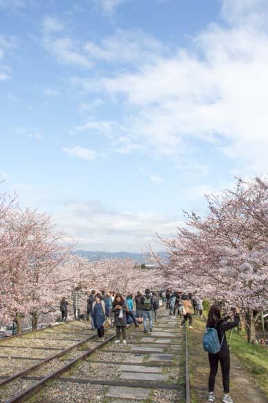 蹴上インクラインの桜鑑賞に行ってきた!おすすめの時間は○時!