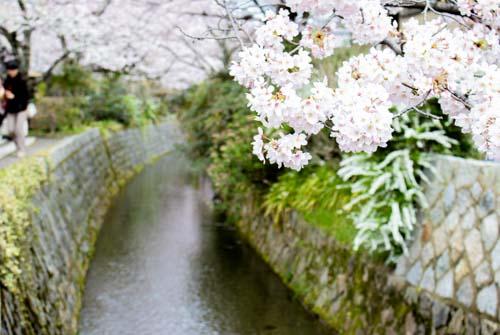 哲学の道へのアクセスおすすめと散策に必要な所要時間を紹介!