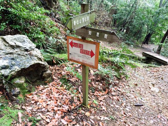 trail-8