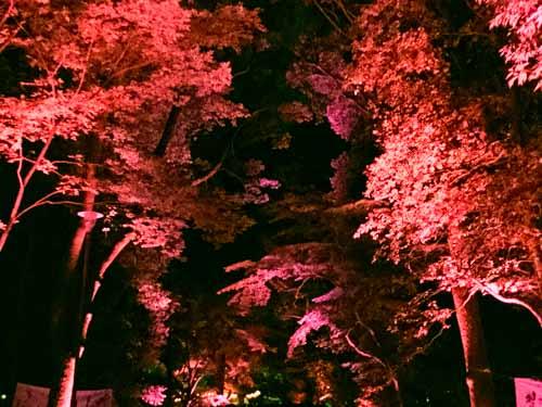 糺の森ライトアップ『呼応する木々』と『呼応する球体』の混雑状況とアクセス方法