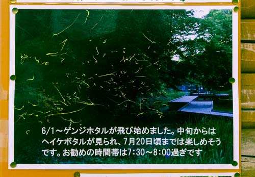 nomizo-hotaru-3
