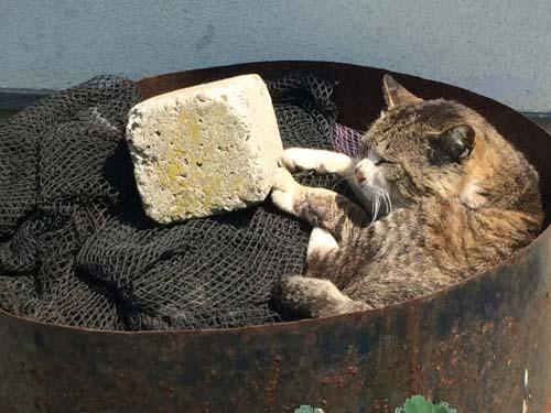 宮城県石巻市にある猫島のアクセス方法と注意点!わかりにくいフェリー料金も